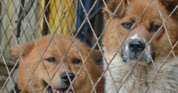 ZERGportal: Hundevermittlung in der Digitalen Transformation