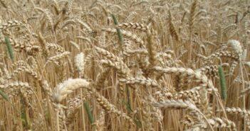 Getreidetrocknung: Lochbleche in der Landwirtschaft