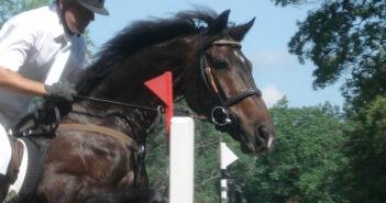 Gummimatte: Pferdesport ist ein Wachstumsmarkt