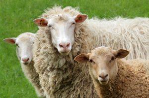 Dämmmatten aus Schafwolle (#3)