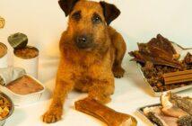 Plastik im Hundefutter, ob dieser kleine Kerl gerade überlegt welches Futter okay ist?