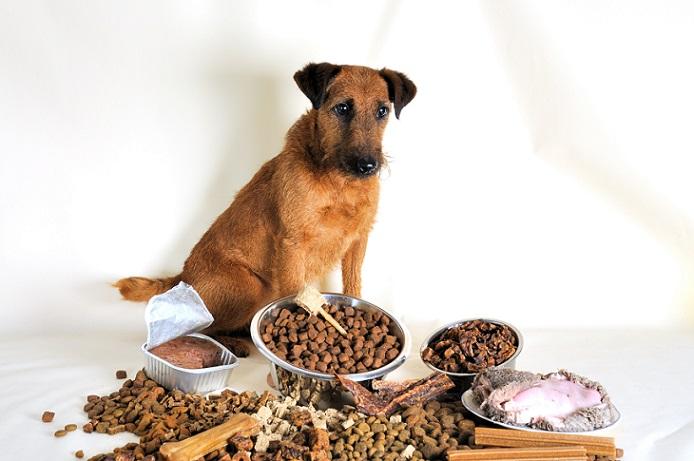 Hund mit verschiedenem Futter: Welches sollte wohl das Richtige sein