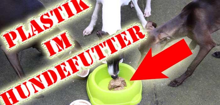 """"""" Plastik im Hundefutter """": das jüngste Gerücht? Was steckt hinter der Story über Plastik in RINTI, PLATINUM & Co.?"""