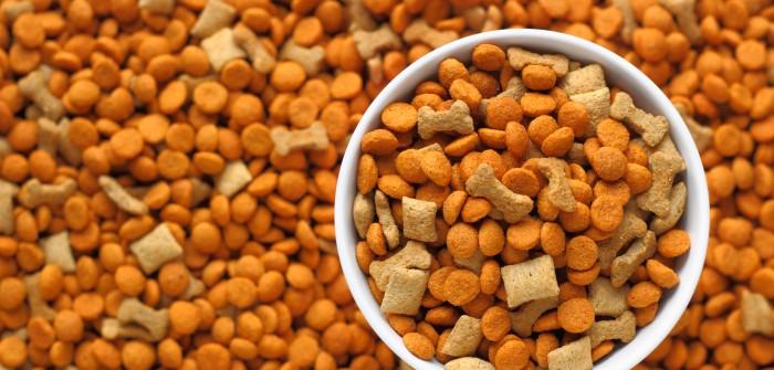 Erfolgreiches erstes Quartal: Zooplus AG meldet Anstieg der Umsatzerlöse