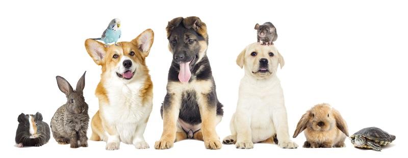 Wer als Start-up Erfolg haben will, ist mit dem Heimtiermarkt in jedem Fall gut beraten. Tiere sind heute nur noch auf den Bauernhöfen und in der Viehwirtschaft wirkliche Nutztiere, die ihren Zweck erfüllen müssen. Hunde, Katzen und sogar größere Tiere werden immer häufiger aus Liebhaberei gehalten und wollen gut versorgt sein. (#04)