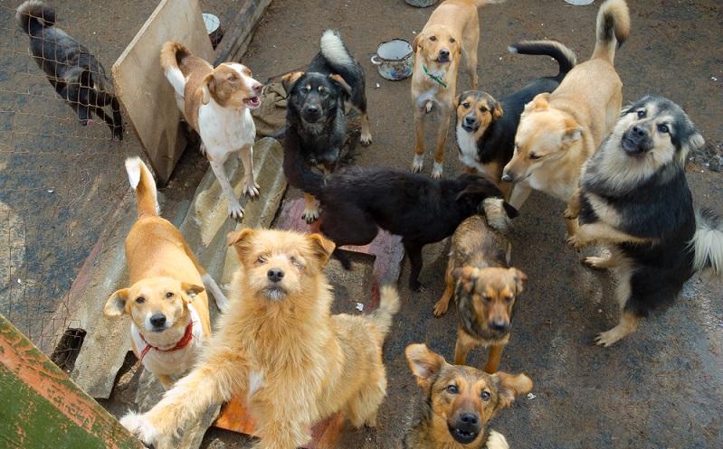 Tierheime sind ständig platzmäßig und finanziell überlastet, daher ist das Portal eine sehr gute Möglichkeit, neue Tierbesitzer zu finden. Die Vermittlung von Tierheimtieren ist ein Defizit, welches schon lange besteht und welches mit dem Portal behoben werden sollte. (#03)