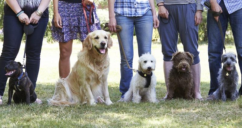 Irgendwann gab es die Erkenntnis, dass ein Hund unmöglich genauso sein kann wie der andere. Eine Deutsche Dogge muss doch andere Bedürfnisse in Bezug auf die Futterzusammensetzung haben als ein Dackel! (#02)