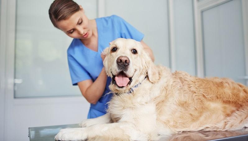 Wenn ein Hund zu häufig mit Antibiotika behandelt wird, dann können sich Resistenzen oder Unverträglichkeiten bilden, die mit weiteren Medikamenten aus der Pharmaindustrie behandelt werden müssen.