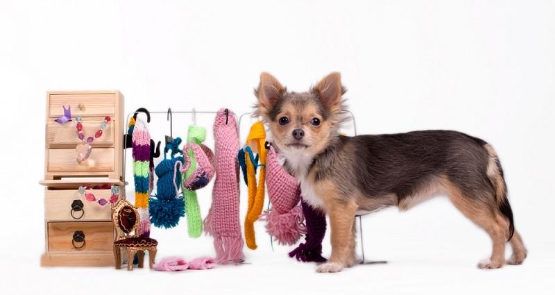 Viele Tiere haben einen ähnlichen Stellenwert, wie ein Mensch und erhalten ein eigenes Sofa, Kleidung und sogar einen eigenen Wagen, in dem sie durch die Gegend gefahren werden. (#02)