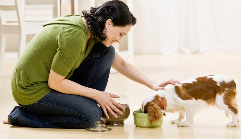 Eine der größten Einnahmequellen der Hundefutterindustrie ist das Trockenfutter. Es ist besonders praktisch für den Halter, denn es macht wenig Schmutz, lässt sich gut dosieren und auch sehr gut transportieren. Daher ist es kaum verwunderlich, dass Halter sehr gerne auf Trockenfutter zurückgreifen. Dieses setzt sich jedoch vor allem aus Tiermehl sowie aus Getreide zusammen. (#05)