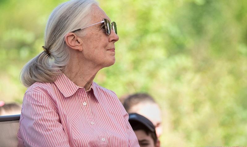 Bekannteste Kämpferin dürfte Jane Goodall gewesen sein, die Affenforscherin.  ( Foto: Shutterstock-vitrolphoto )